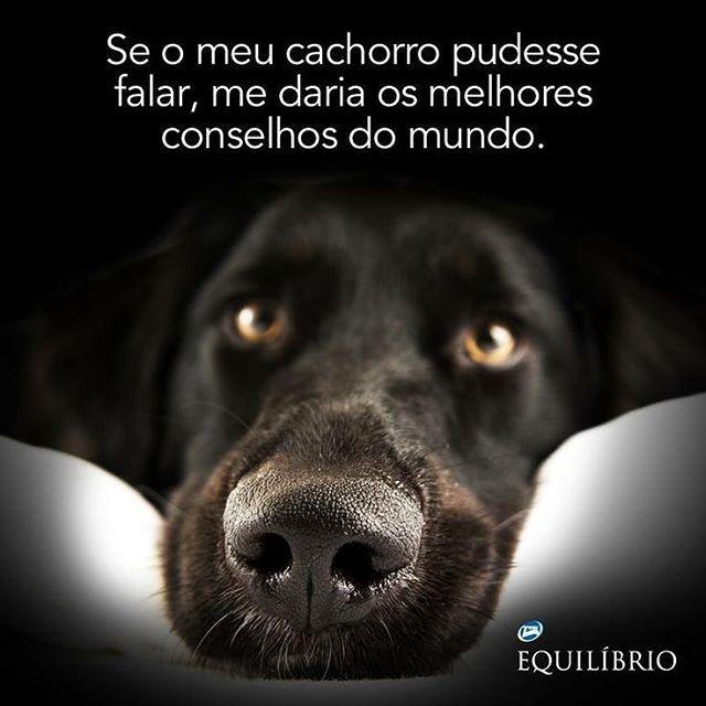 Com certeza!!!! O melhor amigo, a sua amizade verdadeira tem que ser com ele sim! #amooocachorro #elessãohumanos!❤️️❤️️❤️️