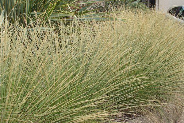 giardini bassa manutenzione - erbe ornamentali - giardini - ridotti consumi idrici - Phytotrend Sanremo