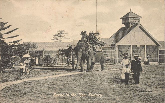 Taronga Zoo is one of Sydney's popular tourist destinations, however its predecessor in Moore Park, known as Billygoat Swamp Zoo, had its own challenges.