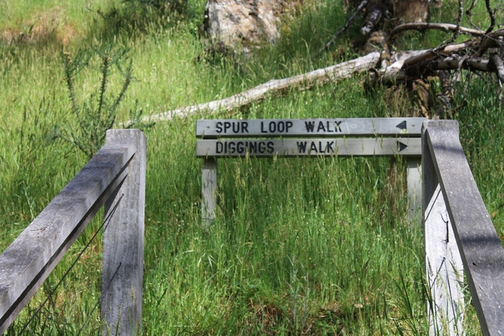 Two beautiful bushwalks from the Blowhole