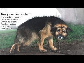 This sweet girl was chained up for 10 YEARS! Whoever saw this 10 years ago should have done something then. REPORT ANIMAL ABUSE WHEN YOU SEE IT, DON'T WAIT 10 YEARS. If you don't then you are worse than the abuser. *~❤•❦•:*´`*:•❦•❤~*