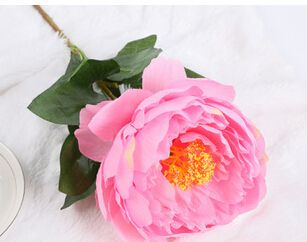 Cheap Flores artificiales fabricación marketing directo de una sola pieza peonía rosa flores blancas venta al por mayor caliente, Compro Calidad Flores y Guirnaldas Decorativas directamente de los surtidores de China: 5 branches 5 flowers a bouquet 2014 hot sale artificial flowers cloth peony low price on sale manufacture direct sale wh