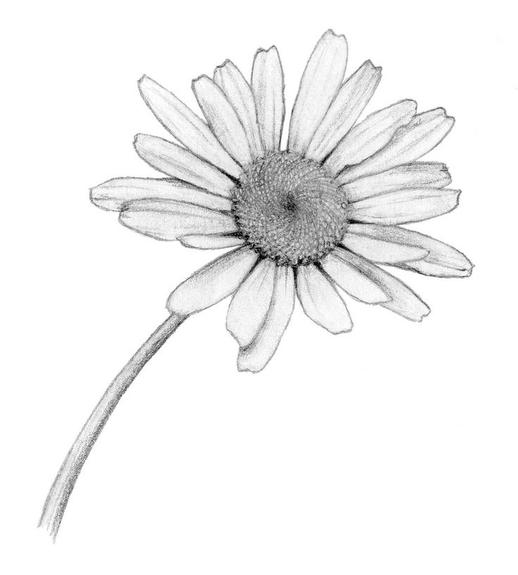 the  best aster flower tattoos ideas on   aster, Beautiful flower