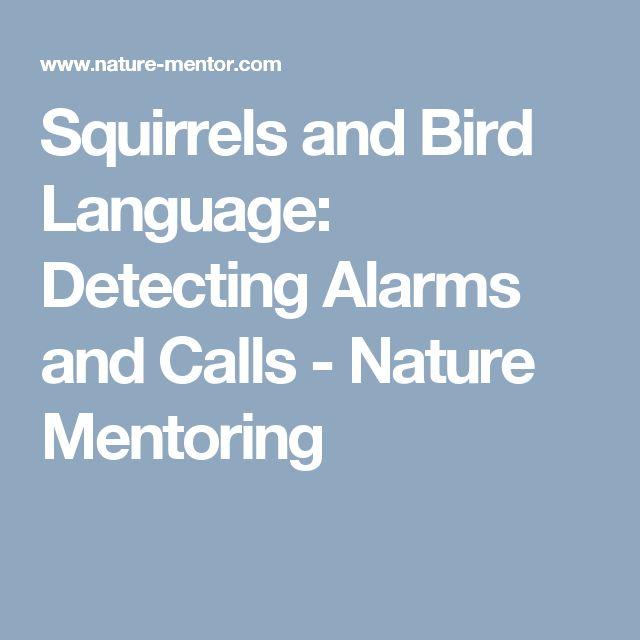 Squirrels and Bird Language: Detecting Alarms and Calls - Nature Mentoring