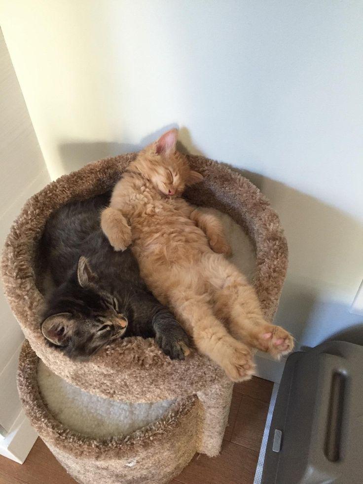 Cada uno tiene su cama... Pero prefieren dormir juntos jajajaja ¡Qué adorables, parecen niños! ❤️⚜