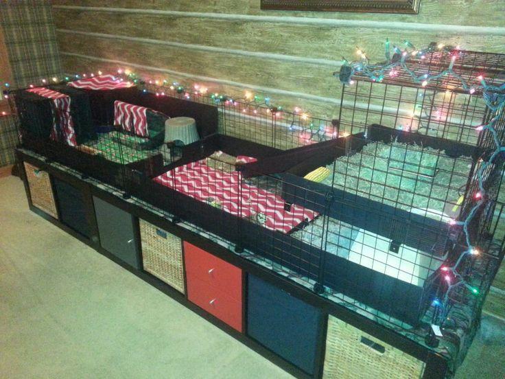 Guinea pig c c cage ideas via tammy krug zografos for Where to get c c cages
