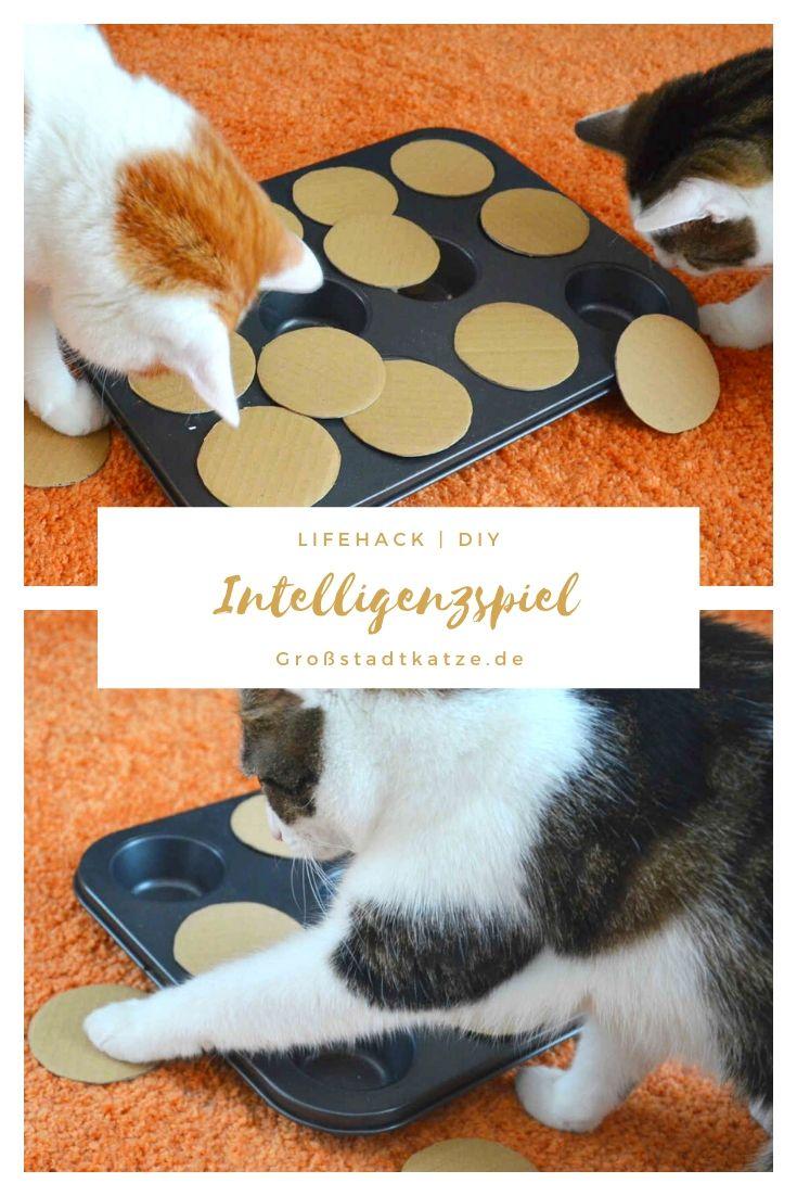 19+ DIY Katzenspielzeug Intelligenzspiel   Katzen spielzeug ... Image