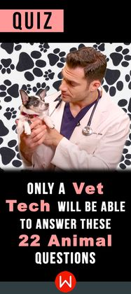 How much do you remember from Bio? Are you a Vet Tech? Veterinarian Technicians are the only people able to ace this test. Vet Trivia, Veterinarian Knowledge, Animals facts quiz. Unless you are a Vet Technician/ Veterinarian, there's no way you'll know all these animal facts.