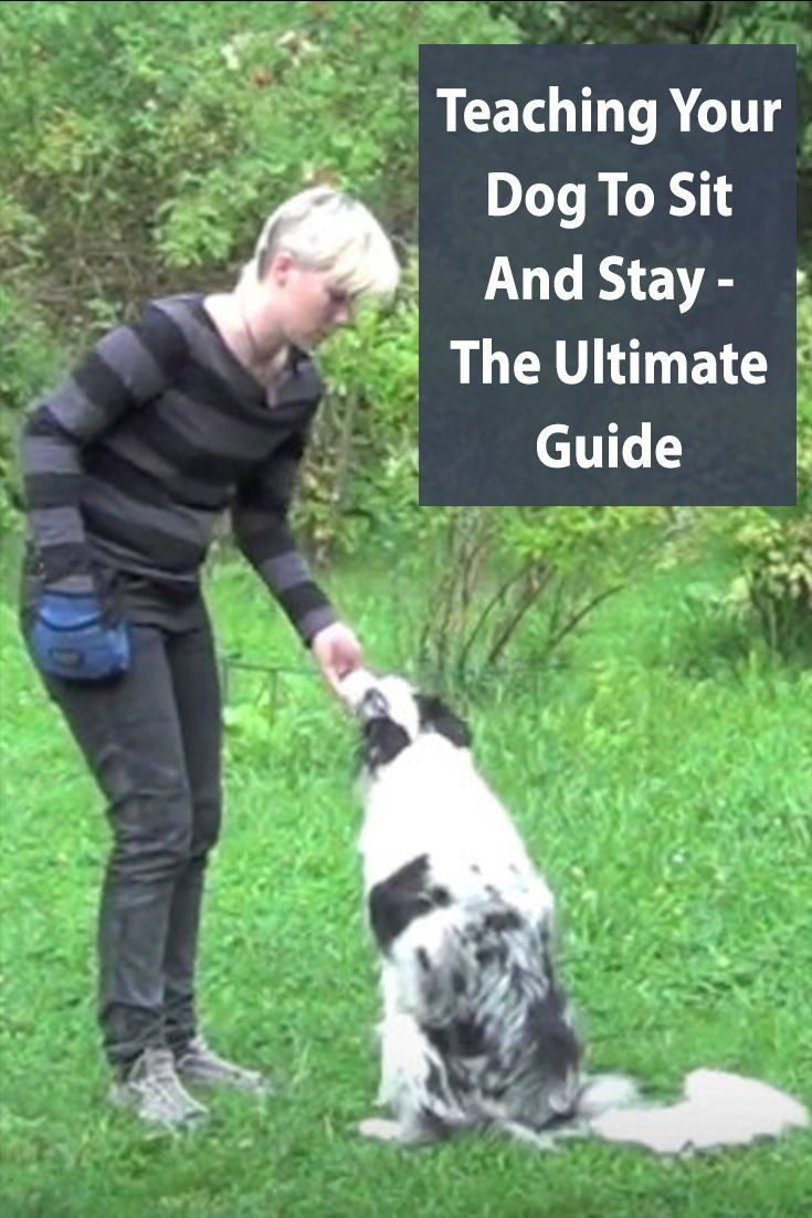 Teach Your Dog The Sit Stay Command A Step By Step Guide Dog