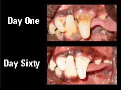 Diga adeus ao bafinho de onça do seu pet Sim, os bichos também têm mau hálito!  Dentes ruins, corpo doente: leia mais