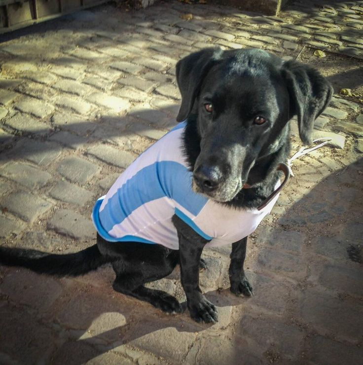 Meet Uco: Argentina's biggest fan and our CEO's sidekick. She even has her own vineyard, 'Uco's Playground'.