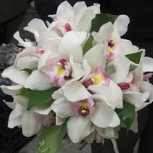 Superior Florist Weddings Personal Flowers Hand Tied Bouquet Of White Cymbidium Orchids With Pink Throat And Salal Greens