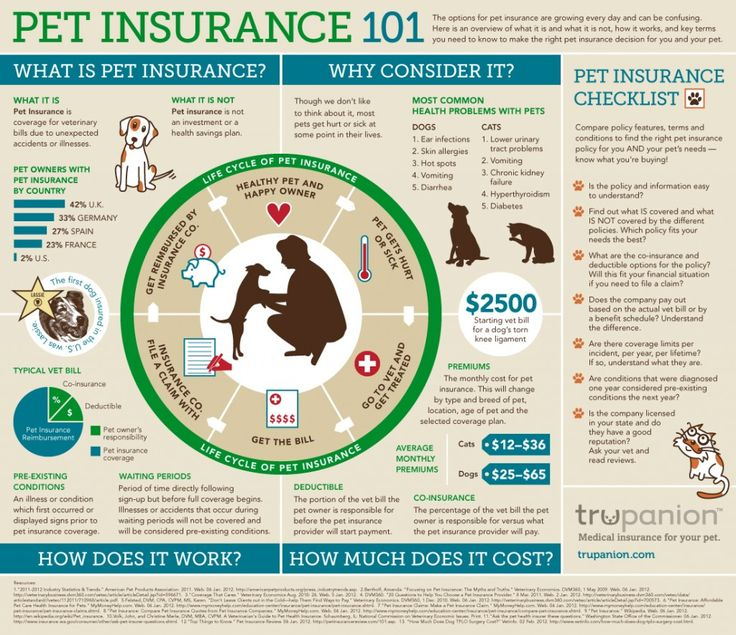 Pet Insurance 101 is a fun infographic designed to answer some of the basic questions pet owners who are considering pet insurance may have.   Withi