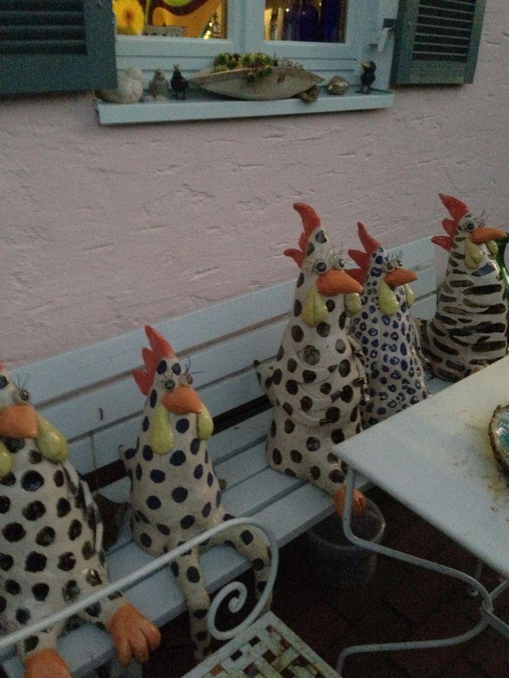 Hühner polka dot chickens
