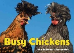 Busy chickens / John Schindel and Steven Holt.