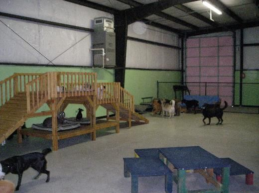 17 best images about dog daycare on pinterest for dogs for Best dog boarding los angeles