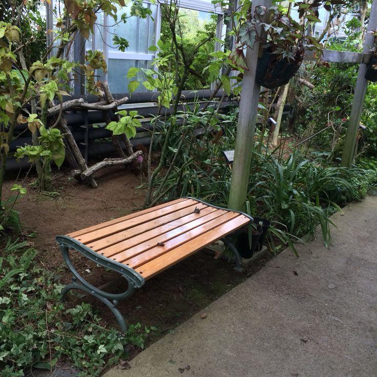 強羅。植物公園内。