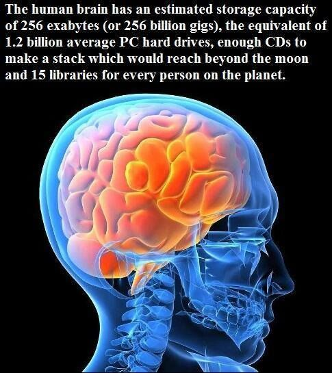 Analysis of the Human Brain