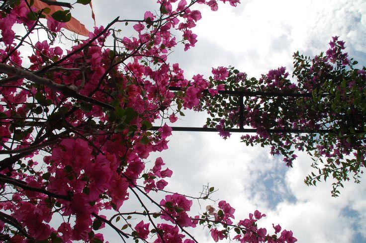 Beautiful gardens around Sahaja Sawah Resort. #garden #flowers #clouds #inspirational #gardens #resort #baliresort #balilife #bali #islandofgods #nature