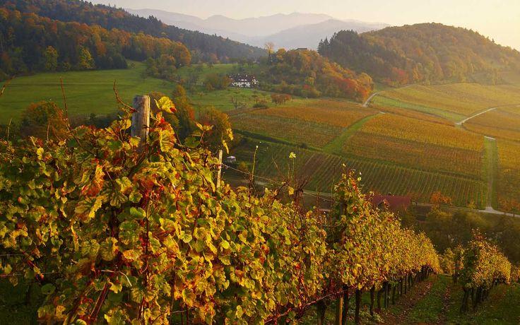 Badischer Wein | Schwarzwald Tourismus GmbH