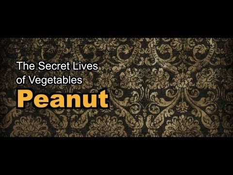 Dive into the dark side of a humble legume with 'The Secret Lives of Vegetables: Peanut'