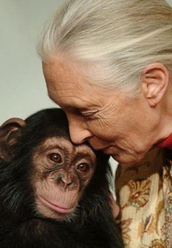 Jane Goodall sooo cuuuteee