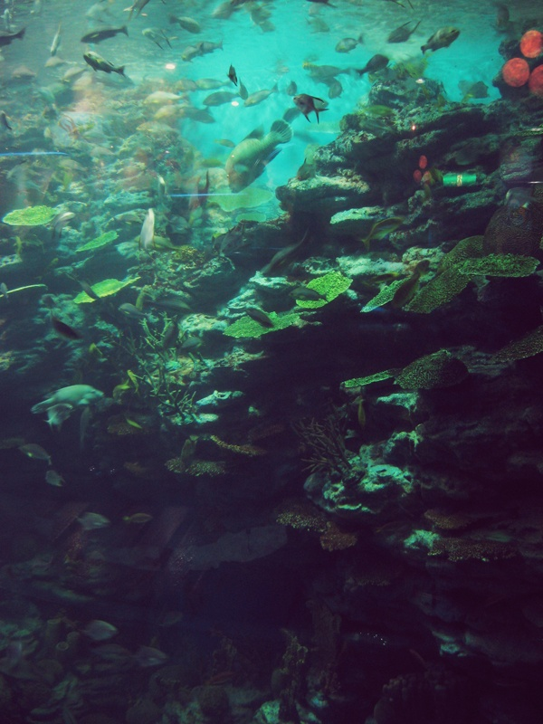 Busan Aquarium Ganda-Ganda: South Korea Pinterest