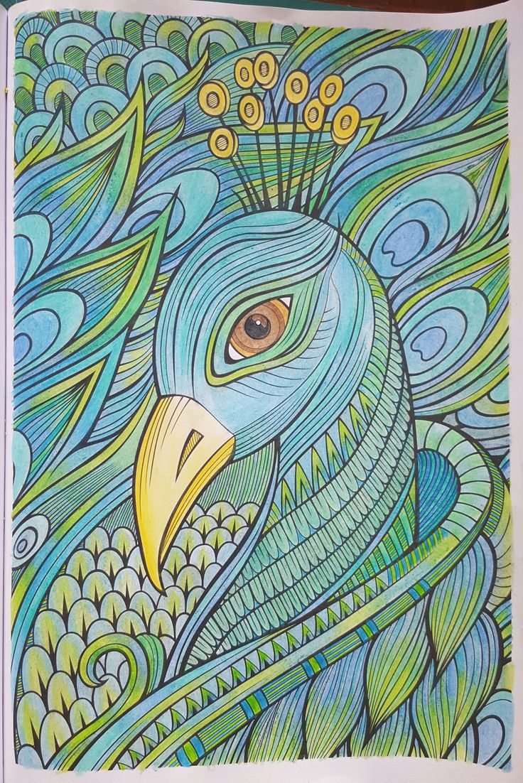 Colored Pencils For Grown Up Coloring Beautiful peacock in watercolor pencils Adult Coloring