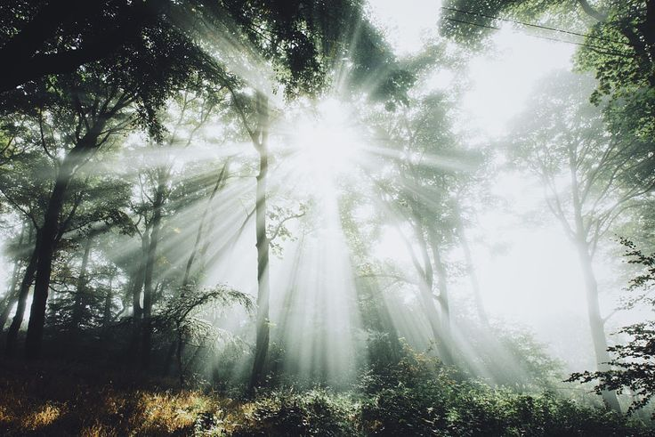 Rays by Daniel Casson on 500px