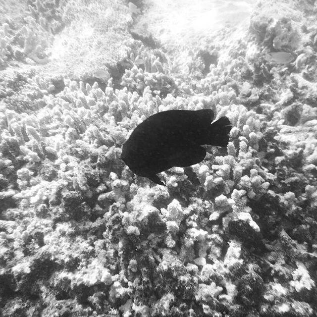 【ameno_ruru】さんのInstagramをピンしています。 《❤ #fish #sea #beach #coral #nature #monochrome #healing #life #love #lovely #angel #photography #photo #swimming #picture #写真 #モノクロ #お魚 #白黒 #珊瑚 #海》