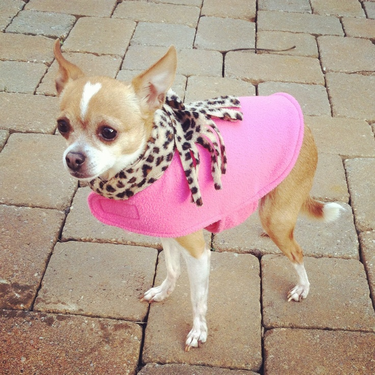 chihuahua dog houses 129 best images about coco s family on pinterest 717