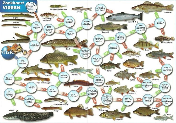 Zoekkaart vissen