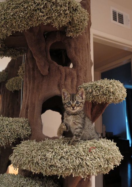 Great cat climbing! I want that tree!