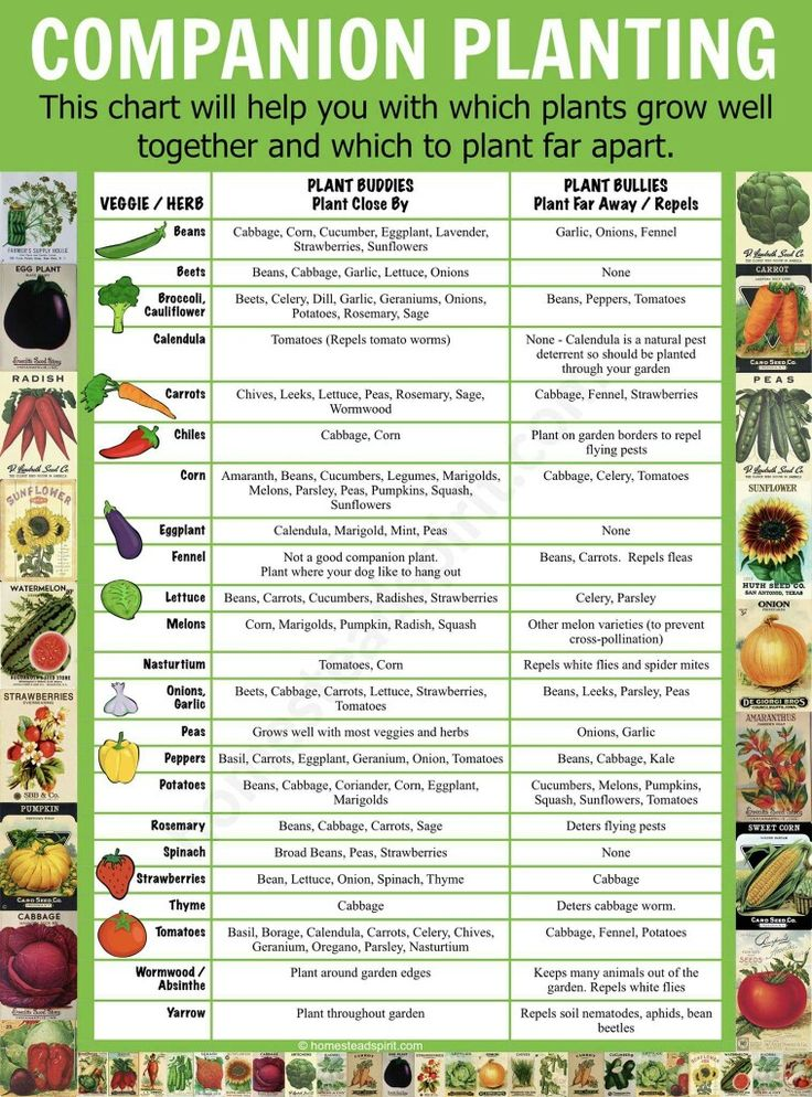 Best 25 hydroponics ideas on pinterest hydroponic for Planning a fruit and vegetable garden