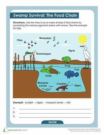 Freshwater Ecosystem Diagram Worksheets Printable - Block And ...