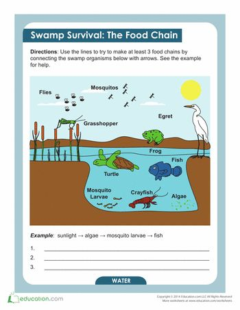 Wetlands Mammals Facts Table 5th - 10th Grade Worksheet | Lesson ...