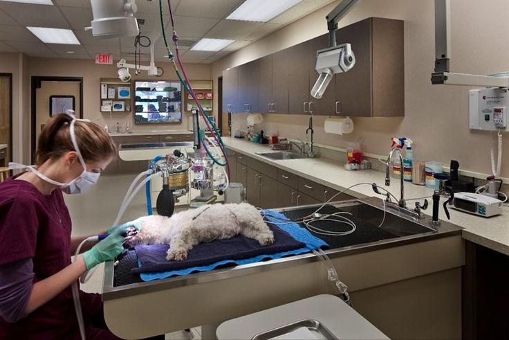 Bayshore animal hospital veterinary services hospital