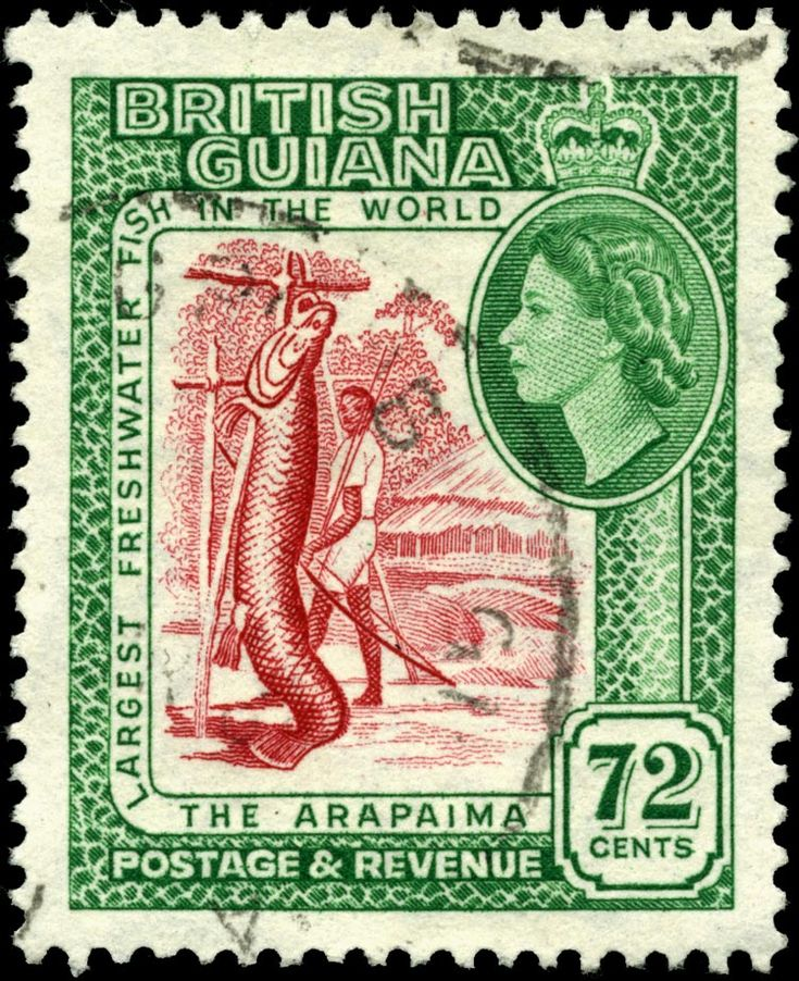 The 1954 72 cent stamp billed the Arapaima as the largest freshwater fish in the world.
