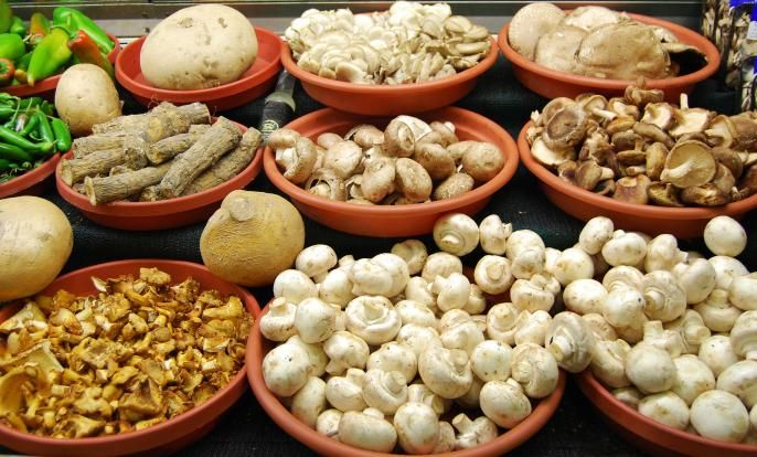 Φαρμακευτικά μανιτάρια on http://manitaroupoli.com/μαθαίνω-τα-μανιτάρια/φαρμακευτικά-μανιτάρια/
