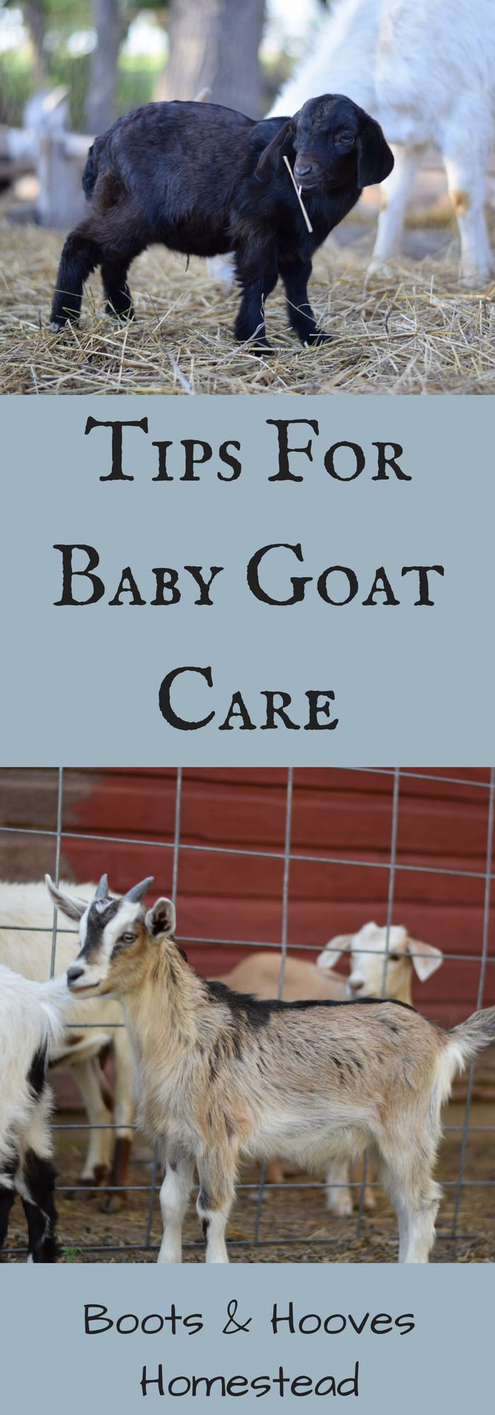 how to take care of a baby goat