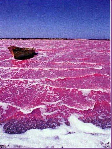 The pink water of Lake Retba, Cap Vert Peninsula, Senegal, west Africa. The rose color is caused by 'Dunaliella salina' algae in the water and is intensified during the dry season.  Pink water? I wanna go there!