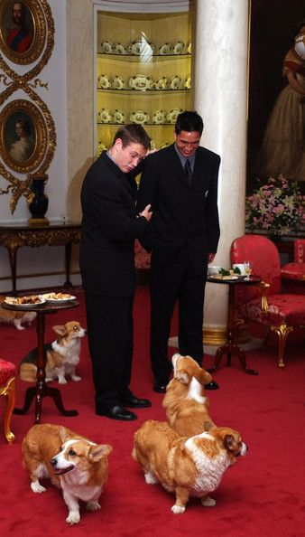 Queen's reception with her Corgis.