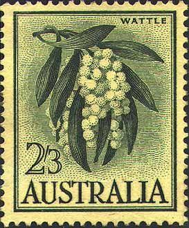 1959 vintage stamp by Margaret Stones of Acacia pycnantha (Golden Wattle) National floral emblem of Australia. #australiannationalflower #wildflower #nativeflower