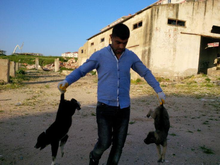 kırklareli belediyesi hayvan barınağı çalışanı,  homo erectus, işkence, yavru köpek