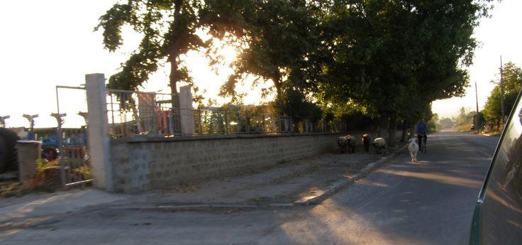naznaczone kolorem: Podróże: Bułgaria, Sveti Vlas