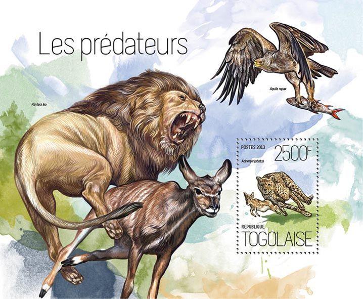 TG 13815 b – Predators, (Acinonyx jabatus).