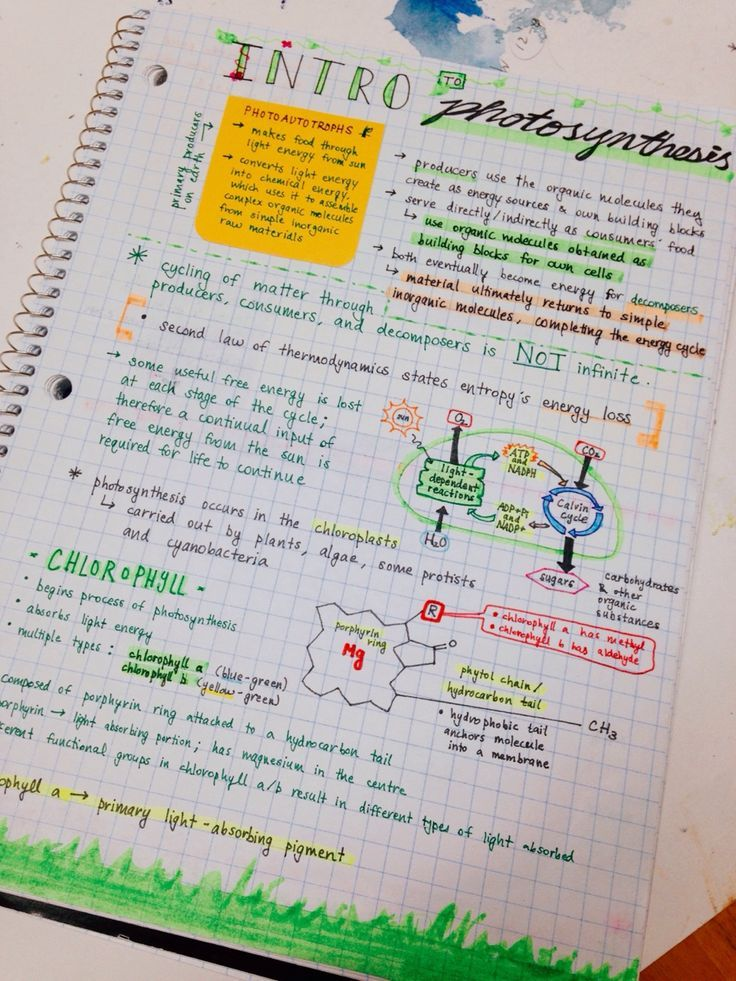 (99+) Likes | Tumblr nice notes for intro to photosynthesis