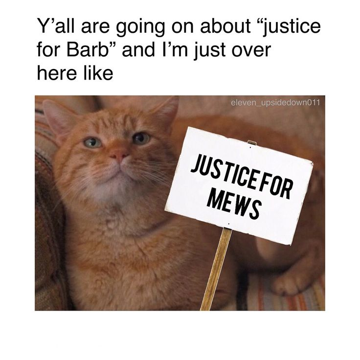 """13.3k Likes, 297 Comments - Stranger Things Obsessed  (@eleven_upsidedown011) on Instagram: """"JUSTICE FOR FREAKING MEWS #justiceformews - • • • • • • • • #strangerthings #upsidedown…"""""""
