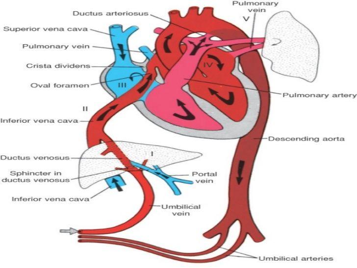 Conceptos Basicos De Doppler Fetal Nursing School Essential Medical School Studying Nursing Study