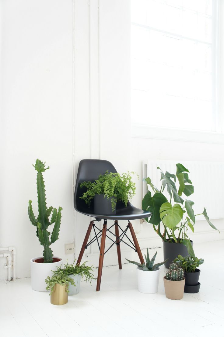 pash living black chair and green plants